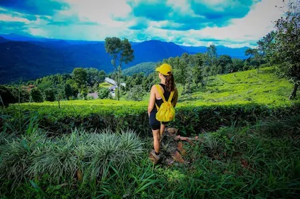 Overnight All-Inclusive Tea Plantation Adventure in Kandy